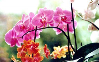 Hobbies e passioni in Casa Albergo, tra orchidee e statuine di gesso